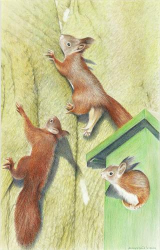 Eekhoorns, 2012, kleurpotlood