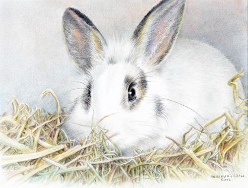 Ko, ons konijn, 2012, kleurpotlood